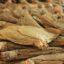 Rencana Pembelian Tembakau di Jember 25.120 Ton
